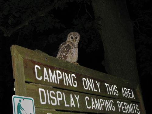 Hey Barred Owl! You're going to need a permit!